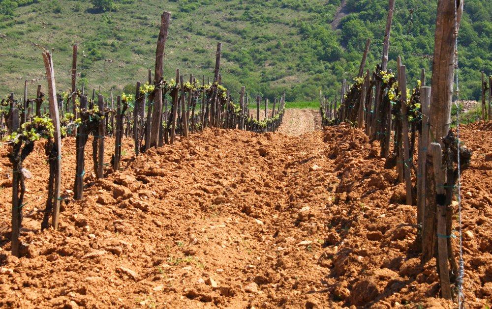 Fotó: www.borrajongo.blog.hu